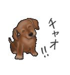 ダックしゅ5(個別スタンプ:3)