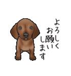 ダックしゅ5(個別スタンプ:5)