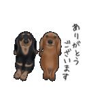 ダックしゅ5(個別スタンプ:10)