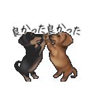 ダックしゅ5(個別スタンプ:12)