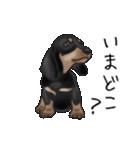 ダックしゅ5(個別スタンプ:16)