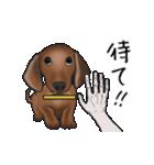 ダックしゅ5(個別スタンプ:17)