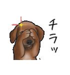 ダックしゅ5(個別スタンプ:19)