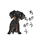 ダックしゅ5(個別スタンプ:20)