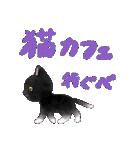 宮城の猫(個別スタンプ:31)