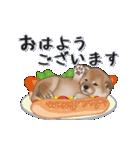 超元気柴Ⅱ(個別スタンプ:1)