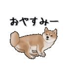 超元気柴Ⅱ(個別スタンプ:3)