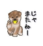超元気柴Ⅱ(個別スタンプ:4)