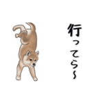 超元気柴Ⅱ(個別スタンプ:6)