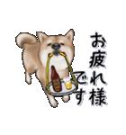 超元気柴Ⅱ(個別スタンプ:8)
