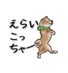超元気柴Ⅱ(個別スタンプ:15)