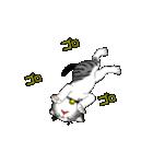 動く!子ネコ&ハムスター(個別スタンプ:16)