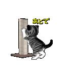 動く!子ネコ&ハムスター(個別スタンプ:18)