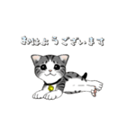 動く!子ネコ&ハムスター(個別スタンプ:20)