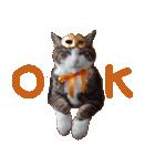 実写!ハチワレ猫のハロウィンスタンプ(個別スタンプ:8)