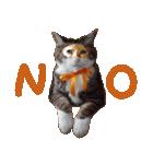 実写!ハチワレ猫のハロウィンスタンプ(個別スタンプ:9)