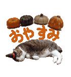 実写!ハチワレ猫のハロウィンスタンプ(個別スタンプ:12)
