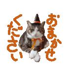 実写!ハチワレ猫のハロウィンスタンプ(個別スタンプ:18)