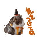実写!ハチワレ猫のハロウィンスタンプ(個別スタンプ:21)