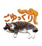 実写!ハチワレ猫のハロウィンスタンプ(個別スタンプ:22)