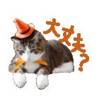 実写!ハチワレ猫のハロウィンスタンプ(個別スタンプ:27)