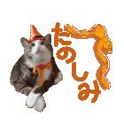 実写!ハチワレ猫のハロウィンスタンプ(個別スタンプ:28)
