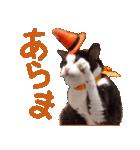 実写!ハチワレ猫のハロウィンスタンプ(個別スタンプ:29)