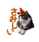実写!ハチワレ猫のハロウィンスタンプ(個別スタンプ:32)