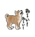 動く!秋田犬Ⅱ(個別スタンプ:2)