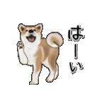 動く!秋田犬Ⅱ(個別スタンプ:3)