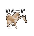 動く!秋田犬Ⅱ(個別スタンプ:4)