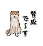 動く!秋田犬Ⅱ(個別スタンプ:6)