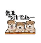 動く!秋田犬Ⅱ(個別スタンプ:8)