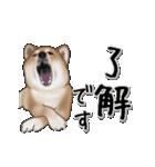 動く!秋田犬Ⅱ(個別スタンプ:9)