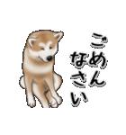動く!秋田犬Ⅱ(個別スタンプ:11)