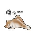 動く!秋田犬Ⅱ(個別スタンプ:12)