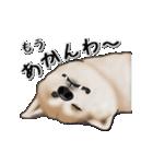 動く!秋田犬Ⅱ(個別スタンプ:13)
