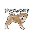 動く!秋田犬Ⅱ(個別スタンプ:15)