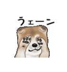 動く!秋田犬Ⅱ(個別スタンプ:17)