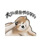 動く!秋田犬Ⅱ(個別スタンプ:20)