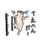 動く!秋田犬Ⅱ(個別スタンプ:21)