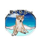 動く!秋田犬Ⅱ(個別スタンプ:22)