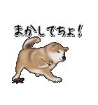 動く!秋田犬Ⅱ(個別スタンプ:24)