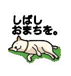 ぽちとルイ 1st(個別スタンプ:20)