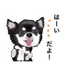 カスタムちわわ(個別スタンプ:3)