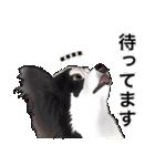 カスタムちわわ(個別スタンプ:8)