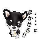 カスタムちわわ(個別スタンプ:12)