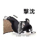 カスタムちわわ(個別スタンプ:20)