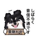 カスタムちわわ(個別スタンプ:21)