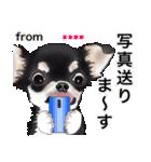 カスタムちわわ(個別スタンプ:24)